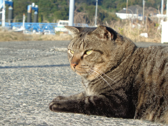 torajirou0080.jpg