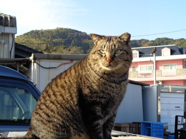 torajirou0085.jpg