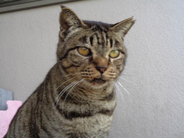 torakichi0081.jpg