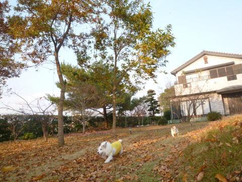 庭の掃除(2)