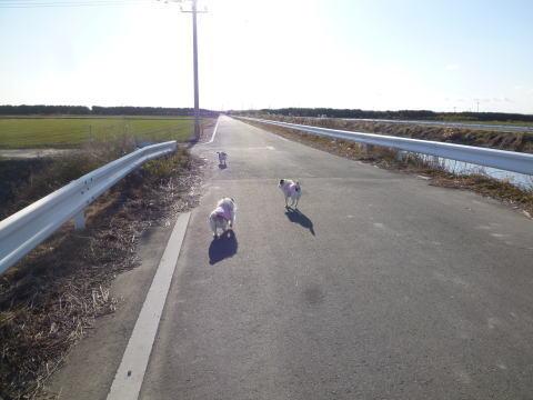 散歩(2)
