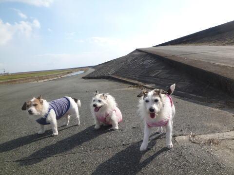 散歩(6)