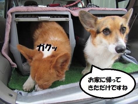 04181119IMG_0459.jpg