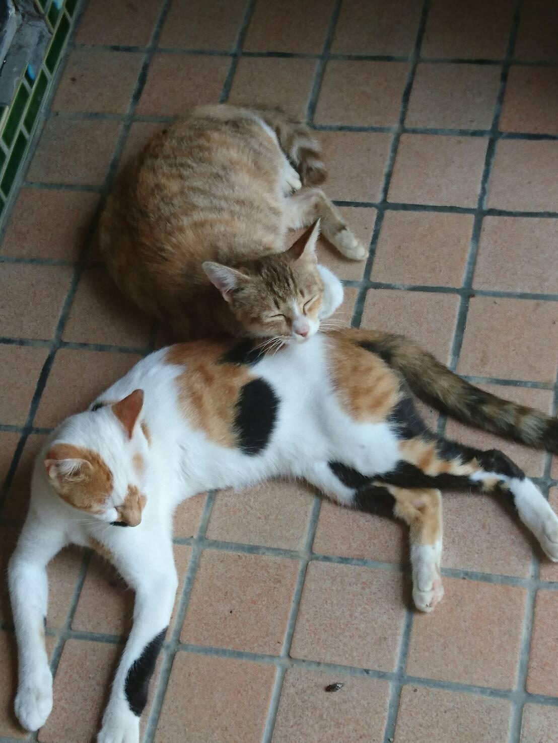 天ちゃんと家に侵入する三毛猫