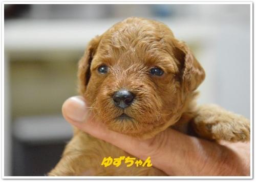 結衣ベビー3週間 (3)