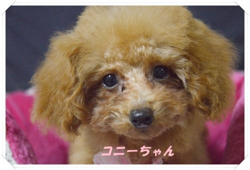 こにーちゃんシャンプー (3)