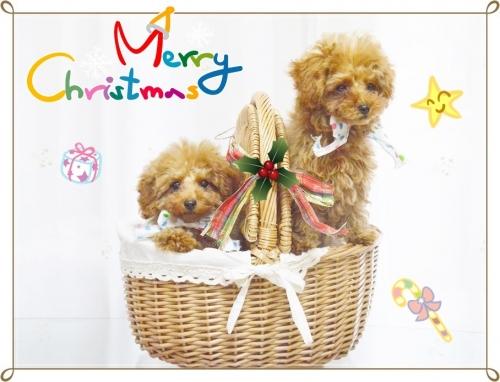 クリスマス (10)