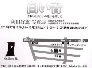 akita1-300x223.jpg
