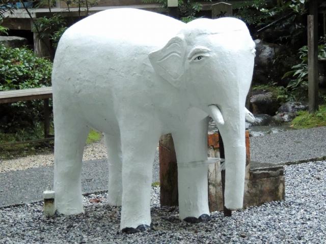N9695白象