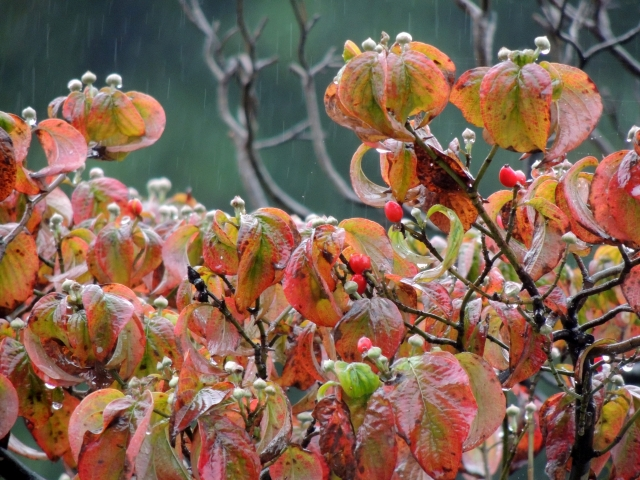 N9772秋の候