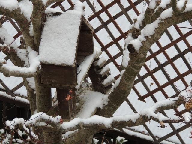 N3967雪の朝