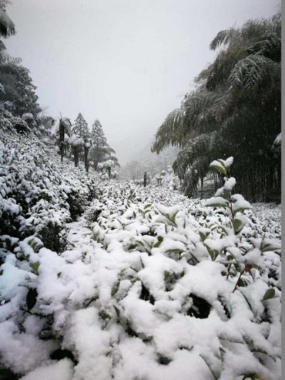 桐木関麻粟-1