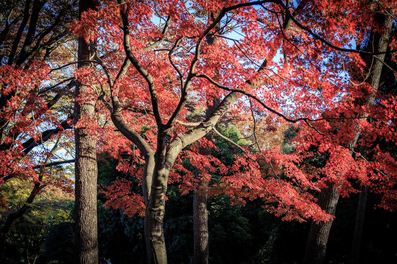 171121代々木公園-3772