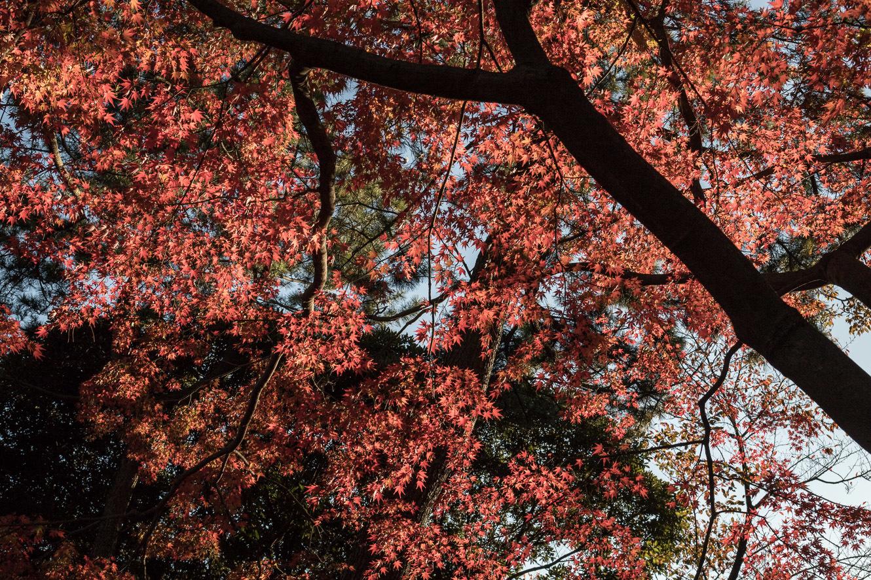 171121代々木公園-3759