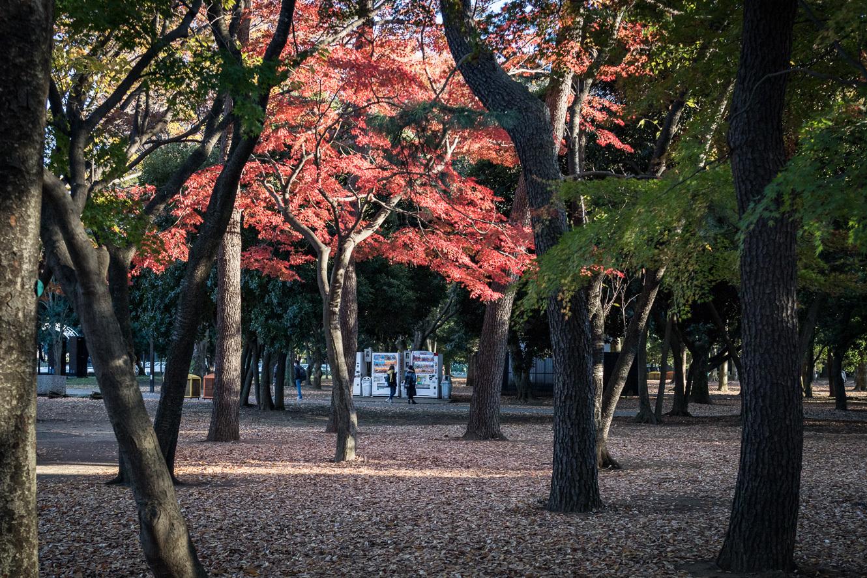 171121代々木公園-3770