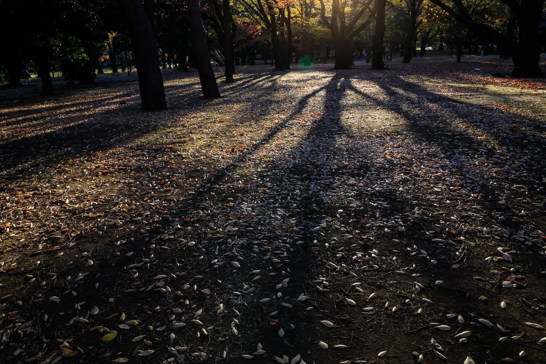 代々木公園2017-3768