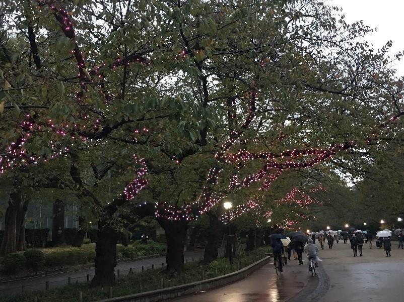 上野恩賜公園2017