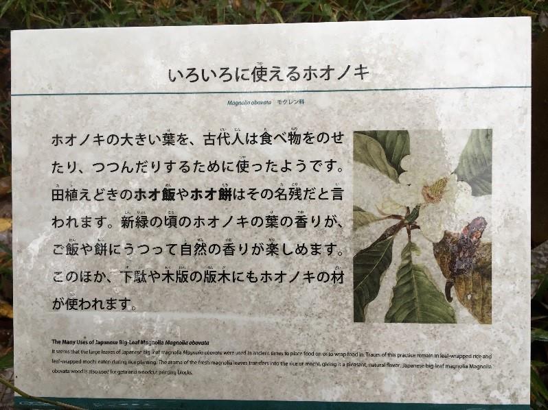 ホオノキの葉とは