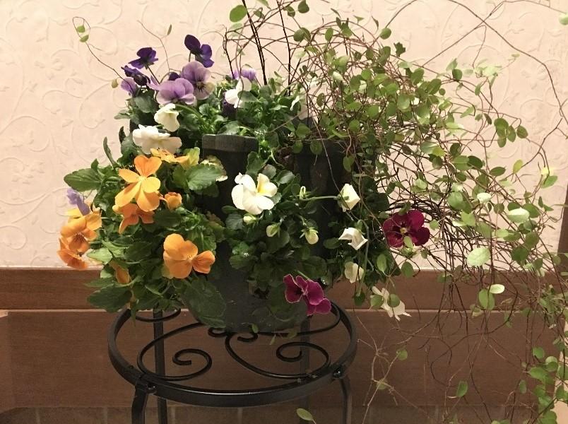 ハンギング花