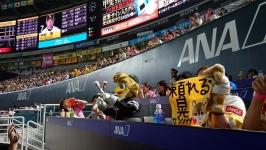 福岡ソフトバンクホークス・ヤフオクドームのANAホームランテラス(1塁側)