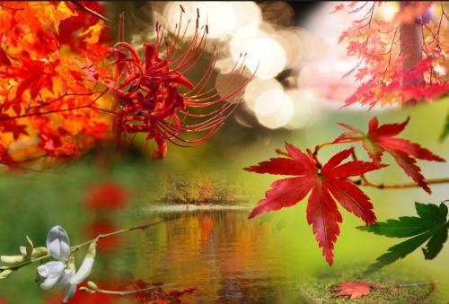 秋というテーマで合成
