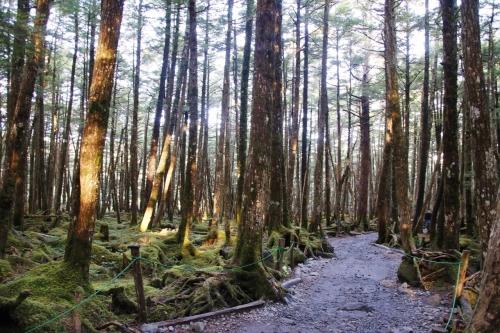 原生林の苔