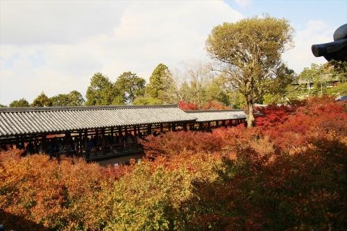 南庭か見える紅葉