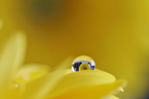 水滴の中に花が