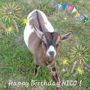 nico00132.jpg