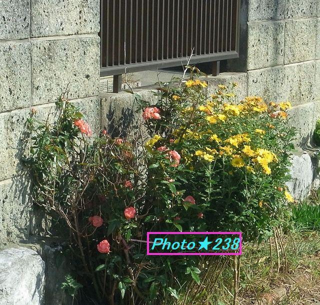 1107道辺の花