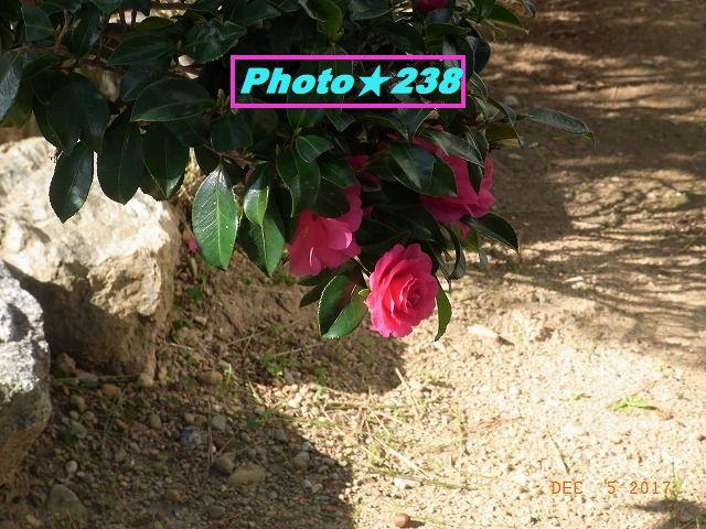 1205庭の椿