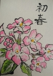 匂い桜29年元旦