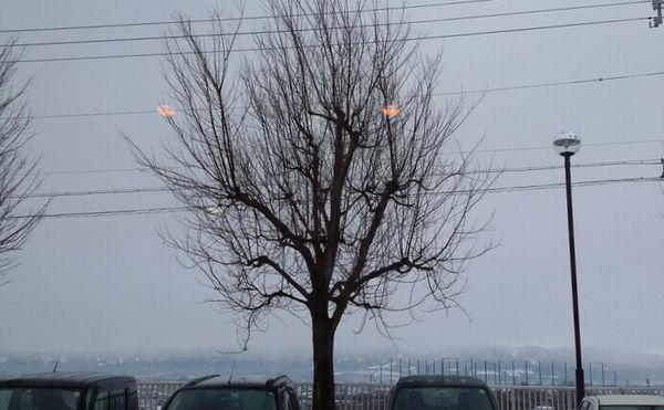 冬支度の樹