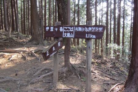 171110二子山~武川岳~伊豆ヶ岳 (41)s