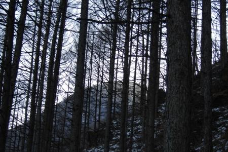 171222矢筈山~モロコシ山~子双山~鈴ヶ岳 (5)s
