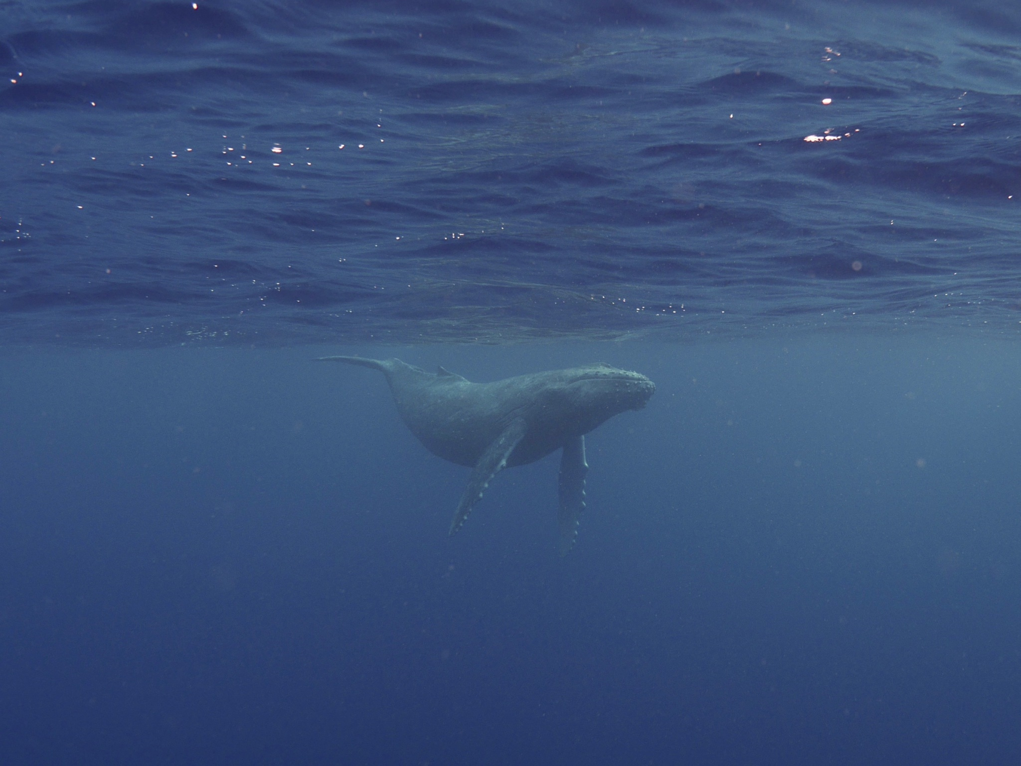 子クジラ1