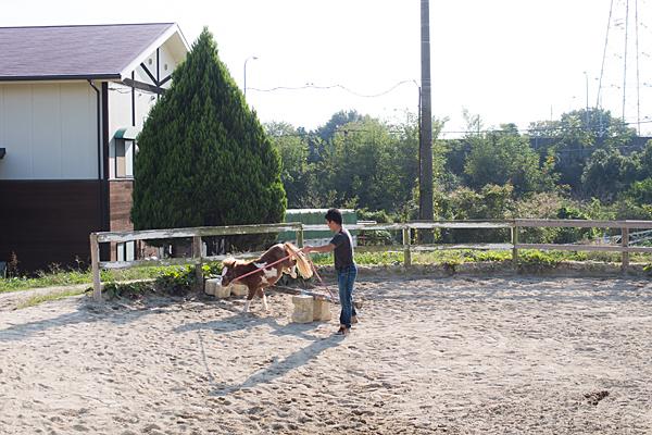 愛知牧場ポニーの訓練