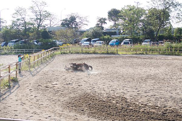 愛知牧場馬の放牧