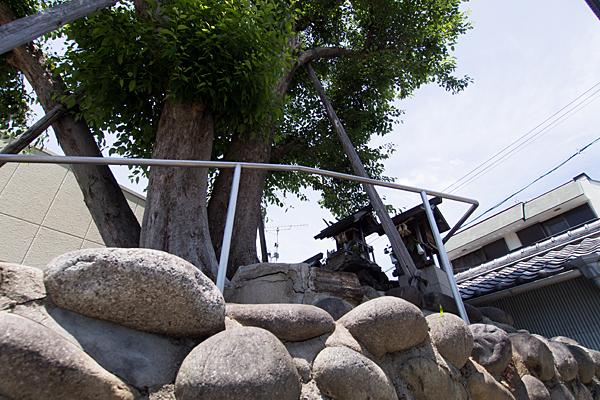 いぼ神様社三社とイチョウの木