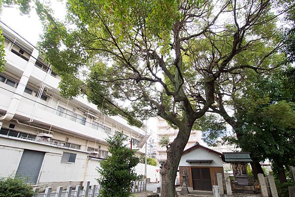 大宝八幡社境内社と巨木