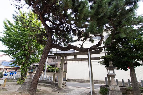 大宝八幡社松の木と鳥居