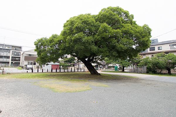 荒子観音何かの木