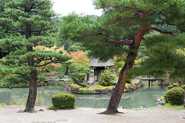永保寺庭園の松と池