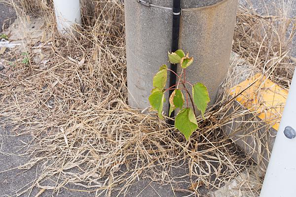 枯れ葉と木の葉