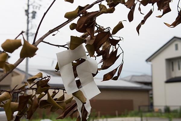 水神社枯れた榊と紙垂