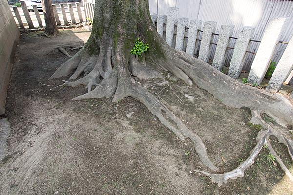 中村本町石神社木の根