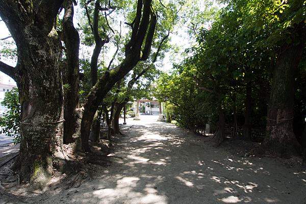 剣町八劔社境内と参道の風景