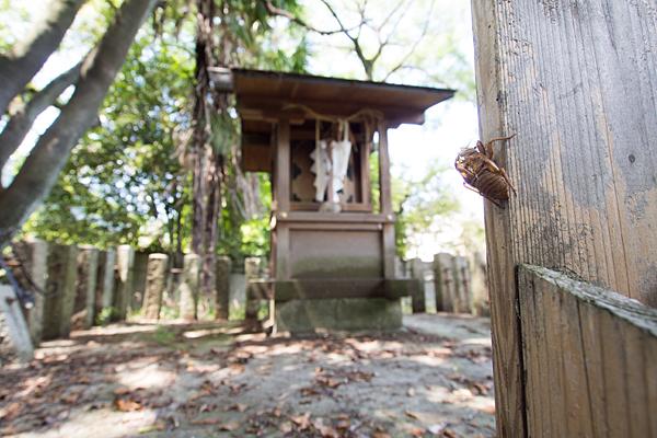 岩塚神明社蝉の抜け殻