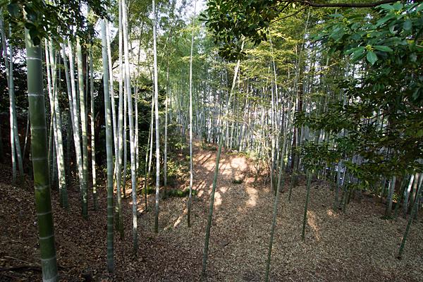 豊藤稲荷神社境内竹林