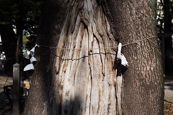金城六所神社御神木と紙垂